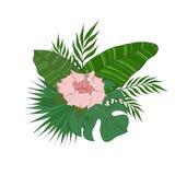 L'ensemble de différents palmiers d'espèces de feuilles et les ketmies fleurissent Photographie stock libre de droits