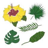 L'ensemble de différents palmiers d'espèces de feuilles et les ketmies fleurissent illustration de vecteur