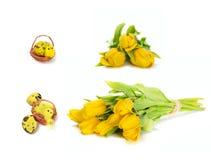 L'ensemble de fleurs de tulipe et oeufs de pâques jaunes et le poulet jouent Photos libres de droits