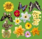 L'ensemble de fleurs en différent et source fleurit Photo libre de droits