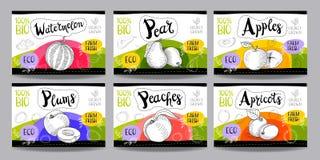 L'ensemble de labels tirés par la main de nourriture, épice des labels, labels de fruit, vege Photo stock