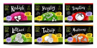 L'ensemble de labels tirés par la main de nourriture, épice des labels, labels de fruit, vege Images stock
