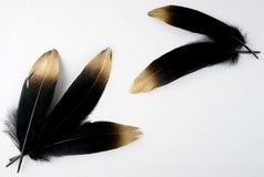L'ensemble de luxe a doré la plume d'or de cygne noir d'or sur le fond blanc image libre de droits