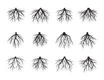 L'ensemble de noir enracine l'arbre Illustration de vecteur illustration stock