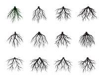 L'ensemble de noir enracine l'arbre Illustration de vecteur illustration libre de droits