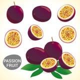 L'ensemble de passionfruit (passiflore comestible de passiflore) dans divers styles composent Photo stock