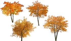 L'ensemble de quatre arbres lumineux d'automne isoalted sur le blanc Photo libre de droits