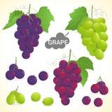 L'ensemble de raisins dans divers styles dirigent le format Photos stock