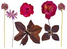 L'ensemble de sauvage sèchent les fleurs et les feuilles pressées illustration libre de droits