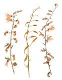 L'ensemble de sauvage sèchent les fleurs et les feuilles pressées Photo stock