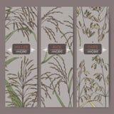 L'ensemble de trois labels avec du riz asiatique, le millet de Proso et l'avoine colorent le croquis Images libres de droits