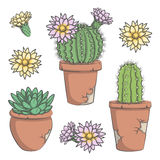 L'ensemble de vecteur a coloré le cactus avec des fleurs dans de vieux pots Photo stock