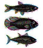 L'ensemble de vecteur dessiné pêche, différentes espèces sous-marines Organi Photographie stock libre de droits