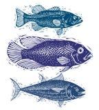L'ensemble de vecteur pêche, différentes espèces sous-marines Seaf organique Photographie stock