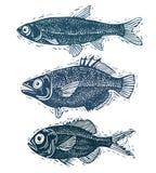 L'ensemble de vecteur pêche, différentes espèces sous-marines Seaf organique Images libres de droits