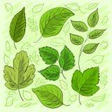 L'ensemble de vert laisse tiré par la main pour votre conception illustration de vecteur
