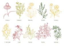 L'ensemble de vintage de vecteur de dix a coloré les herbes médicinales Photo libre de droits