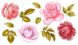 L'ensemble floral de vecteur de fleurs roses de vintage blanc bleu rouge-rose verdissent les feuilles d'or d'isolement sur le fon illustration stock