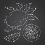 L'ensemble tiré de citrons Segments de citron, citron juteux Image libre de droits