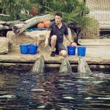 L'entraîneur donne des instructions aux dauphins avec le sifflement Photo stock