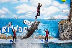 L'entraîneur effectuent sauter avec des dauphins de bottlenose Photographie stock libre de droits