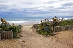 L'entrata del veicolo sulla spiaggia ha allineato con aloe Immagine Stock Libera da Diritti
