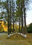 À l'entrée du monastère de Ramet, la Roumanie Image stock