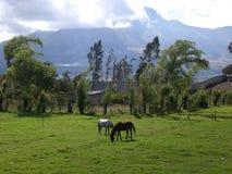 l'Equateur Images libres de droits