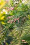 L'erba è fiore rosa Fotografie Stock Libere da Diritti