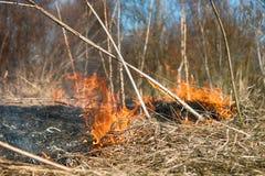 L'erba asciutta arde fra i cespugli, fuoco nell'area dei cespugli immagini stock