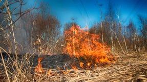 L'erba asciutta arde fra i cespugli, fuoco nell'area dei cespugli immagine stock libera da diritti