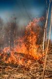 L'erba asciutta arde fra i cespugli, fuoco nell'area dei cespugli fotografie stock libere da diritti