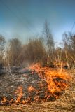 L'erba asciutta arde fra i cespugli, fuoco nell'area dei cespugli immagini stock libere da diritti