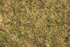 L'erba asciutta, il fieno, paglia ha strutturato il fondo del confine Fotografie Stock