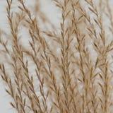 L'erba astratta semina il fondo Immagine Stock