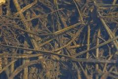 L'erba con stilla Fotografie Stock