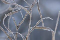 L'erba congelata Fotografia Stock