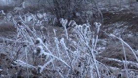L'erba congelata con la copertura del gelo ondeggia nel vento dell'inverno video d archivio