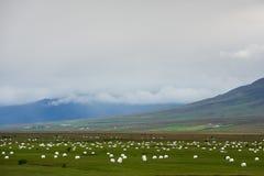 L'erba del taglio è preparata per stoccaggio sui campi, Islanda dell'inverno Fotografia Stock