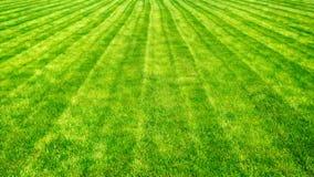 L'erba del taglio di campo da bocce allinea il fondo Fotografia Stock Libera da Diritti