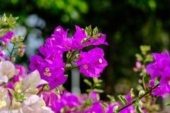 L'erba dell'estate lascia i fiori realmente per renderci bei fotografia stock libera da diritti