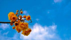 L'erba dell'estate lascia i fiori realmente per renderci bei immagini stock libere da diritti