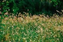 L'erba dell'estate lascia i fiori realmente per renderci bei immagini stock