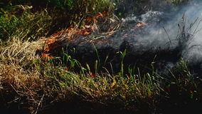 L'erba dell'estate sta bruciando nell'incendio violento, disastro naturale video d archivio