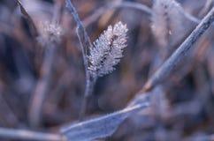 L'erba di autunno è coperta di lustro di brina di gelo la luminosità dell'autunno immagine stock libera da diritti