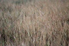 L'erba di Brown lascia il fondo di struttura del modello fotografia stock