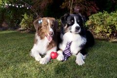 L'erba di cani di amore delle coppie che pone il giorno di biglietti di S. Valentino felice celebra il giardino concettuale diver Fotografie Stock
