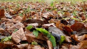 L'erba di colore fotografia stock libera da diritti