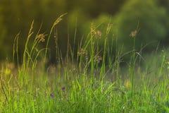 L'erba ed i fiori della montagna nelle montagne dopo l'estate piovono! Fotografia Stock Libera da Diritti