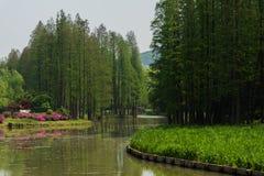 L'erba ed i fiori si avvicinano all'acqua Fotografia Stock Libera da Diritti
